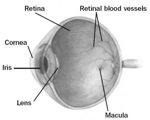 eye schematic